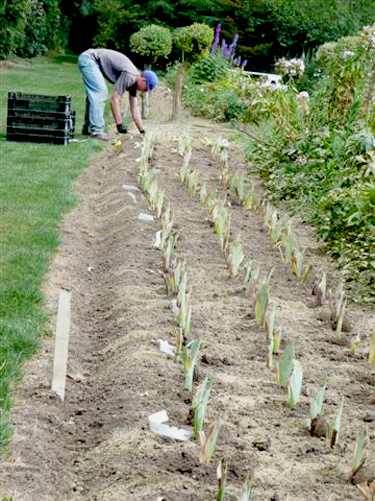 Preparation for Planting For the Love of Iris