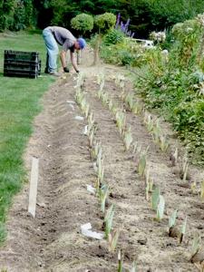 Replanting Schreiner's Iris Gardens