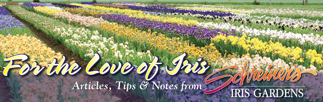 Articles, Tips And Notes From Schreineru0027s Iris Gardens