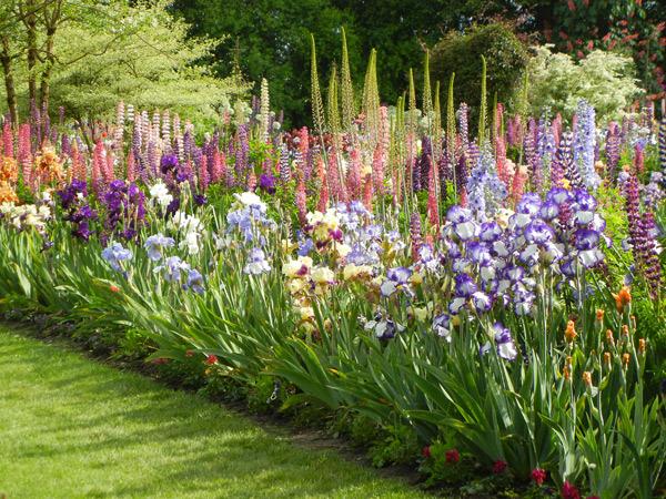 Iris Companion Plants 600 x 450