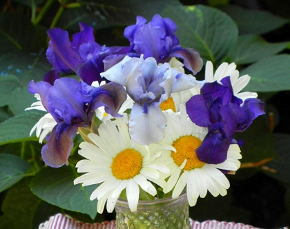 Three Dwarf Iris arranged with Daisies: Blueberry Tart (left), Forever Blue (center), and Autumn Jester (right)