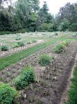 garden_replant2010-2-web