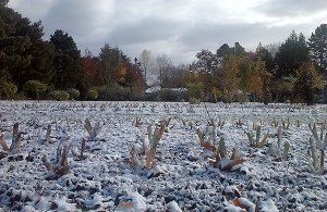 SnowGardenSmall