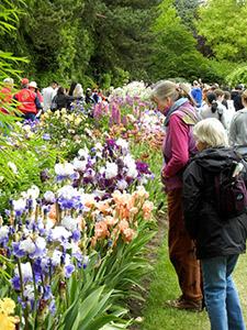 Memorial Day Celebration|Schreiner's Iris Gardens