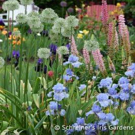 Schreiner's Iris Gardens|Sky and Sun