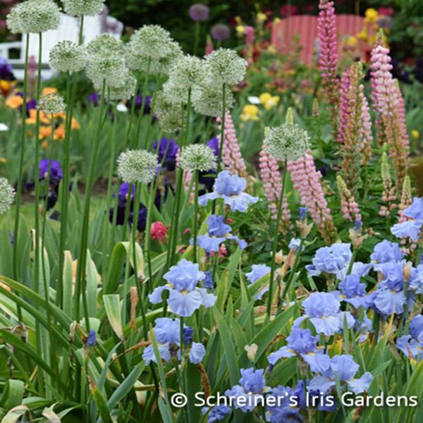 Schreineru0027s Iris Gardens|Sky And Sun