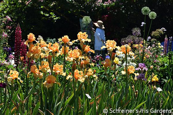 Charmant Schreineru0027s Iris Gardens|Oh So Yummy