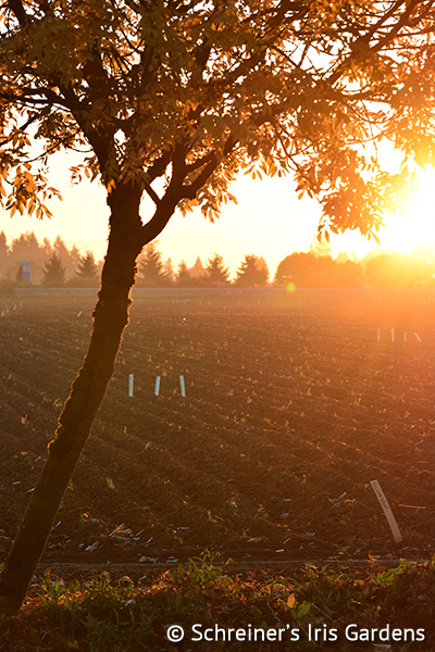 Schreiner's Gardens|Sunrise over Newly Planted Fields